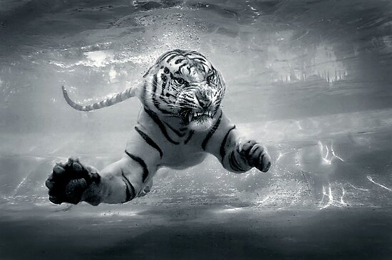 Underwater Danger by Jeff Rayner