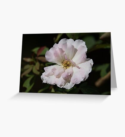 White, Raindrops And A Hint Of Pink Greeting Card