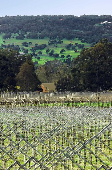 Swan Valley Winery by EOS20