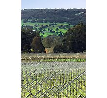 Swan Valley Winery Photographic Print