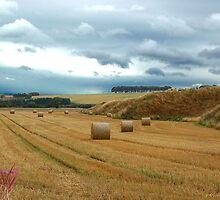stormy fields by Mandy Fell