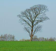 Just a tree by Manuel Gonçalves