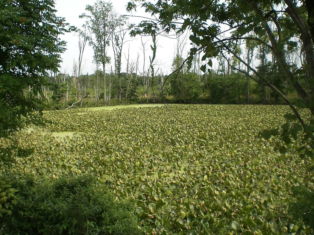 Swampy Meadows by Steven Slusher