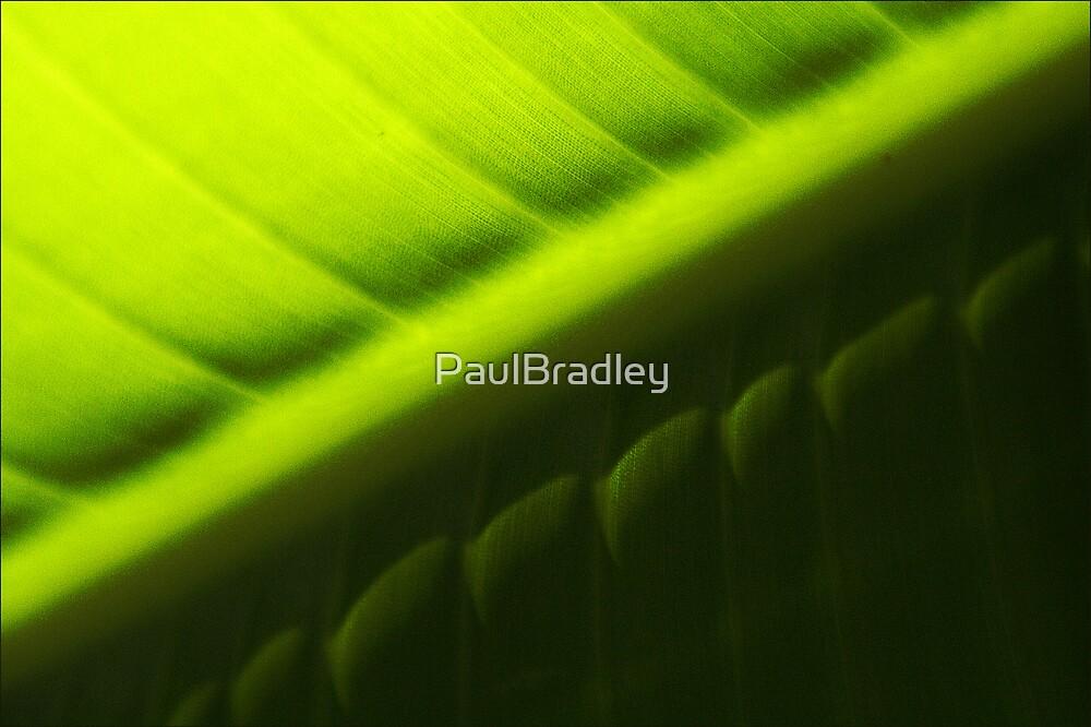 Green by PaulBradley