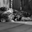 Lazy day's by Mark Williams