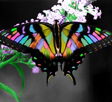 Multi-Colored Butterfly by Kimberly M. Rupert