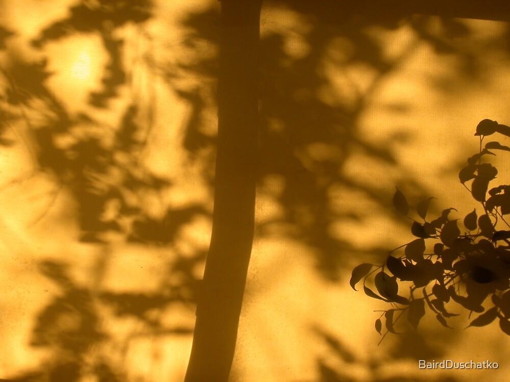 Sun Through Shade by BairdDuschatko