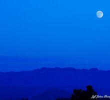 Blue Moon by Jeff Johns