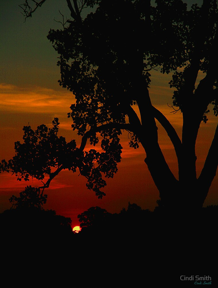 SUNSET THROUGH THE TREES by Cindi Smith