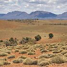 Wilpena Pound, Flinders Ranges in the Spring by Carole-Anne