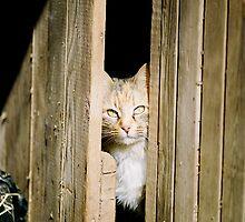 Barn Cat by Kelly Williams