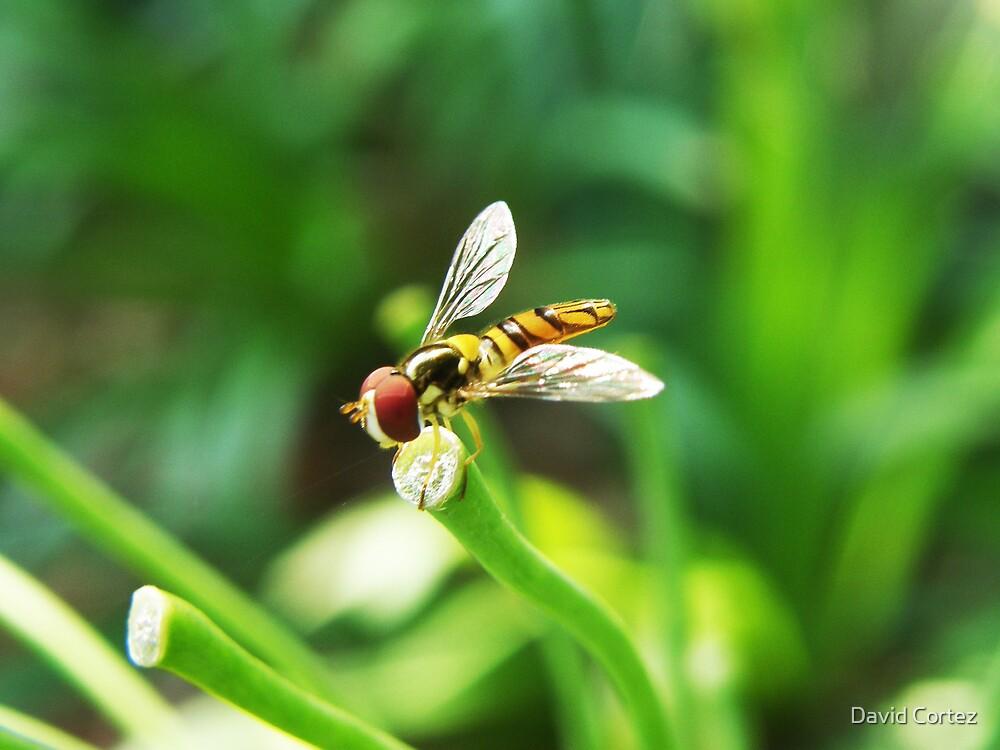 Little Bee by David Cortez