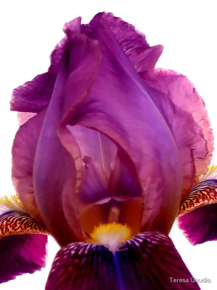 Iris by Teresa Gaudio