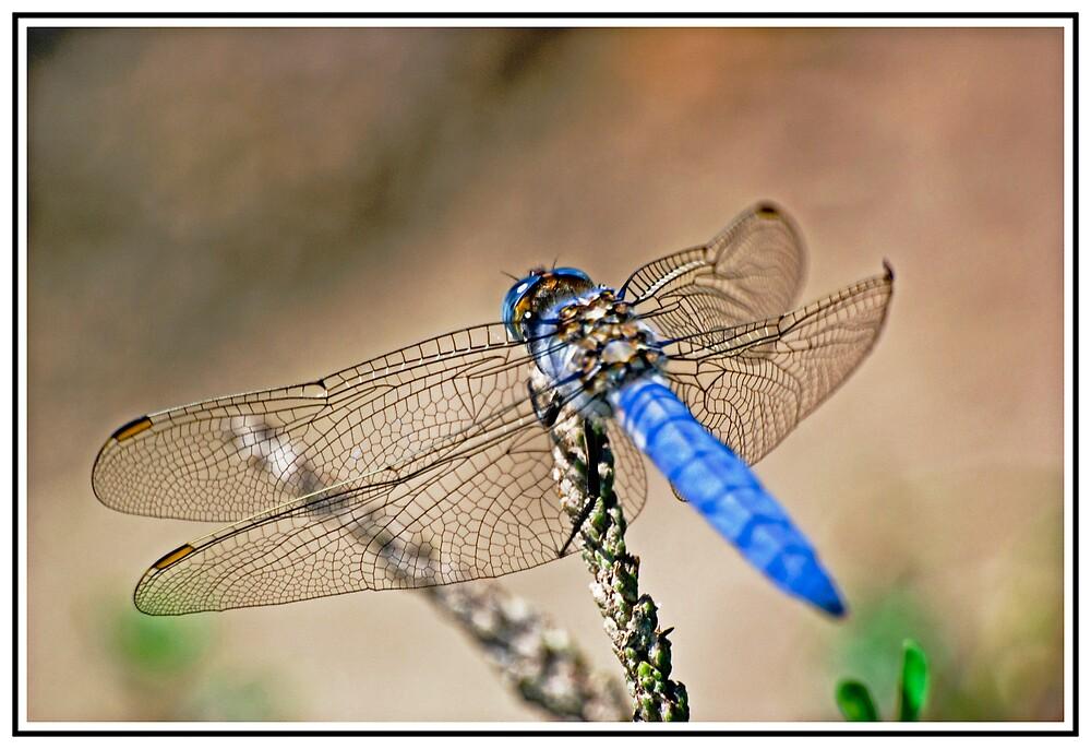 Beautiful Blue by Stojs