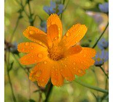 Orange by Stefan Trenker