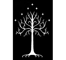 white tree of Gondor Photographic Print