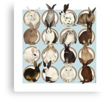 Rabbit Breeds Canvas Print