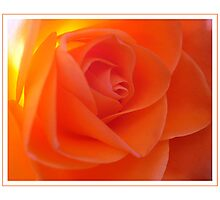 Rose amber Photographic Print