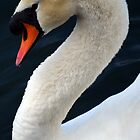swan by Tgarlick