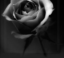 Rose in Mono 2 by shall