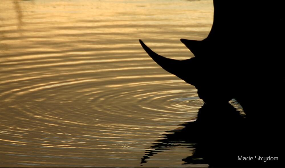 Rhino @ Sunset by Marie Strydom