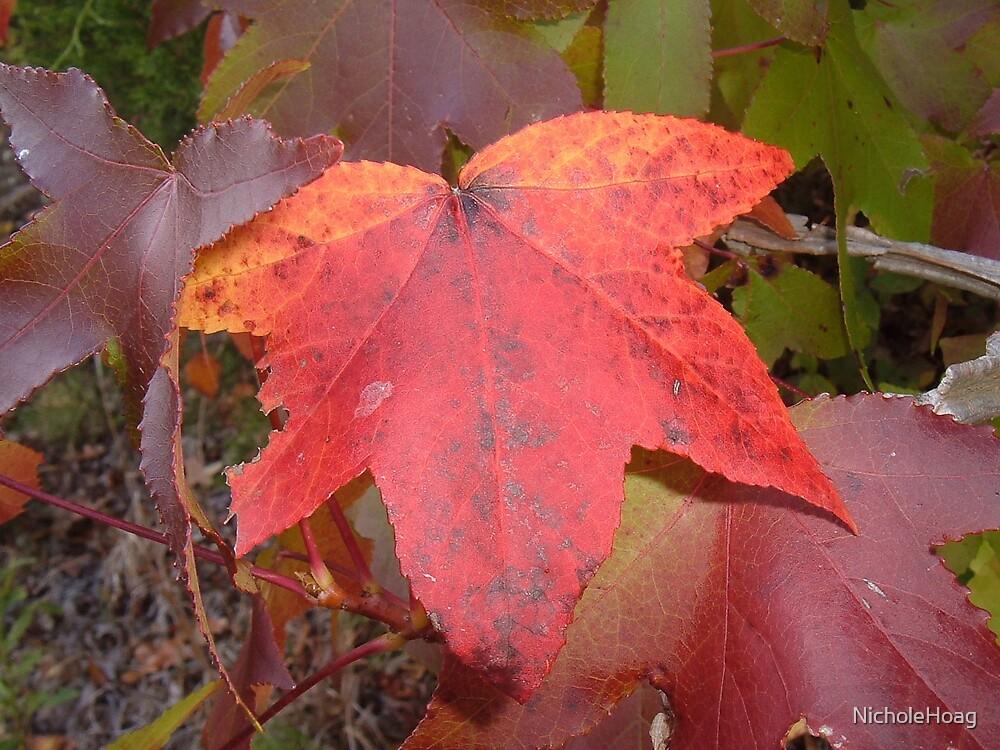 Love the Fall by NicholeHoag