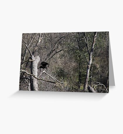Turkey Vulture Greeting Card