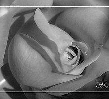 Red rose mono by shall