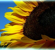 Sunny Sunflower by shall