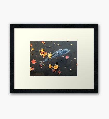 Autumn koi Framed Print