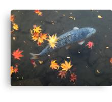 Autumn koi Canvas Print