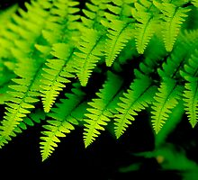 Fern Patterns by Terri Foster