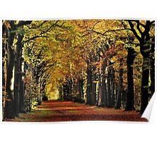 Enjoying more autumnal sunshine Poster