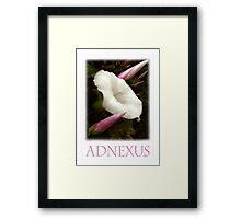 ADNEXUS Framed Print