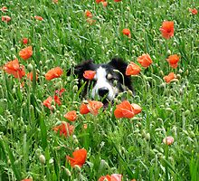 Poppy Dog by Monster