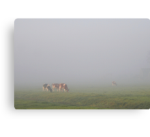 Cows in the Fog Canvas Print