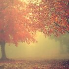Autumn Fog by Melinda Potter