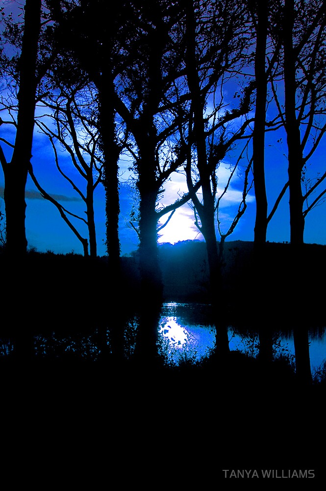 BLUE SKY AT NIGHT! by TANYA WILLIAMS