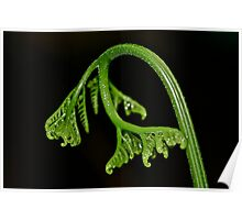 New Born - Fern Frond Poster