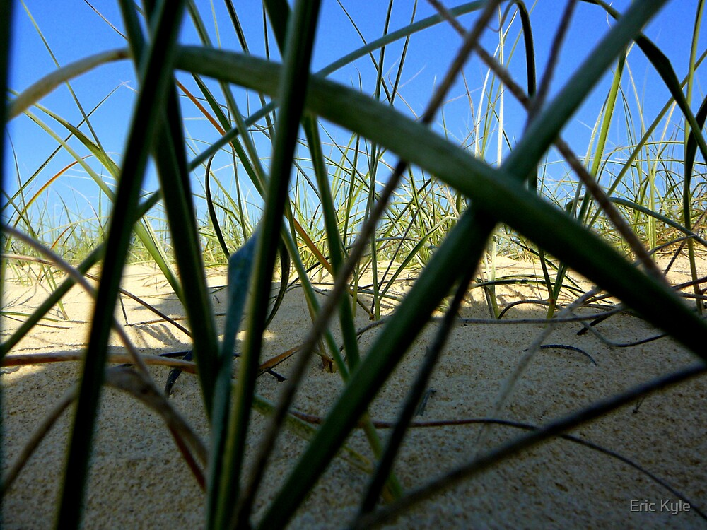 BEACH GRASS by Eric Kyle