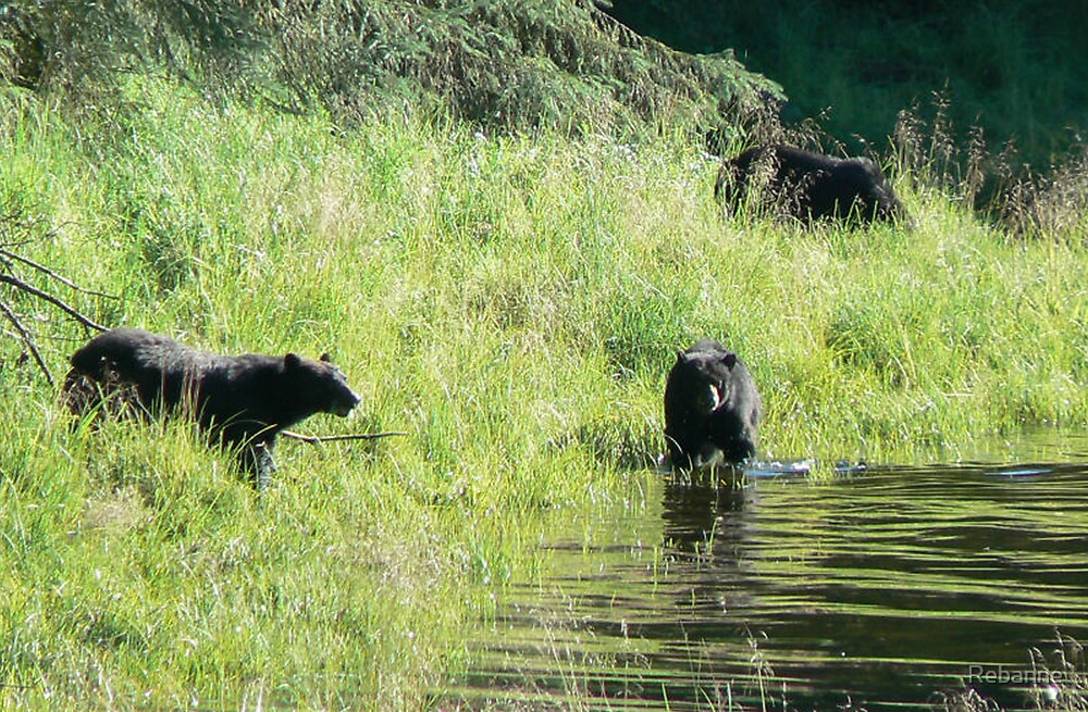 3 Black Bears by Rebanne