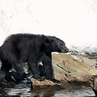 Black Bear  by Rebanne