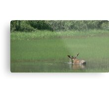 Big Bull Moose Metal Print