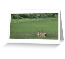 Big Bull Moose Greeting Card