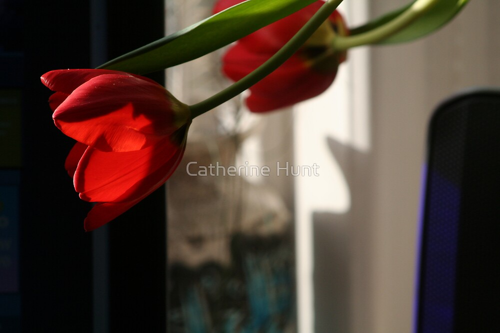 Tulips by Catherine Hunt