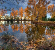 Autumn in Otago County by Mel Brackstone