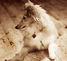 Sheltie Sepia by Moth