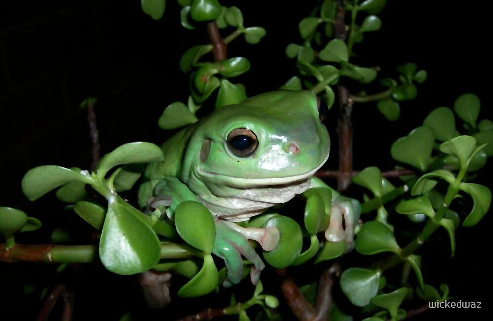 Frog's Eye by wickedwaz