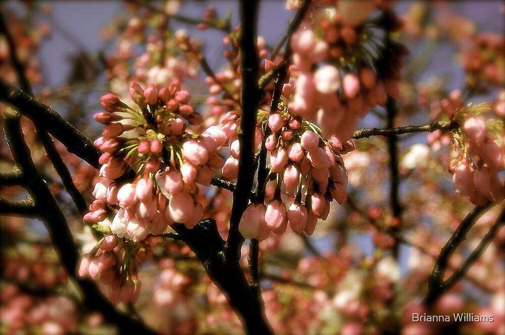 cherry blossom by Brianna Williams