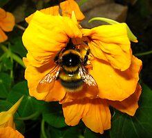 bumblebee by justraducu